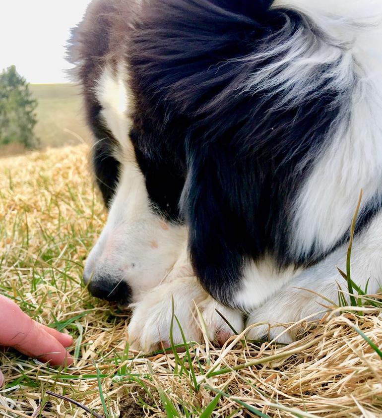 Hundebaby schnuppert feinfühlig